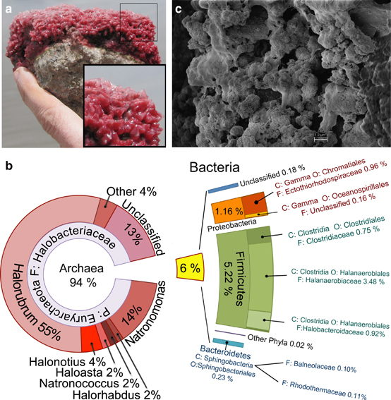 Biofilms from volcano crater in Diamante Lake and metagenomic analysis. Figure from The ISME Journal 10, 299-309 (February 2016), doi:10.1038/ismej.2015.109